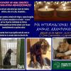 DíA INTERNACIONAL DEL ANIMAL ABANDONADO 2016