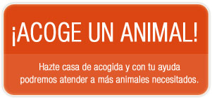 Hazte casa de acogida y con tu ayuda podremos atender a ms animales necesitados.