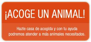 Hazte casa de acogida y con tu ayuda podremos atender a más animales necesitados.